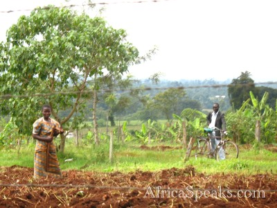 Workers prepare an agricultural field