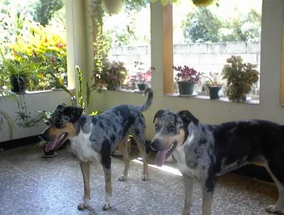 Nzinga and Sheba: posing