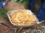 Highlight for Album: Gold Rush in Kakamega District
